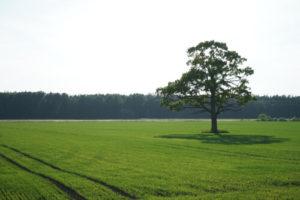 Levante Ideias - Árvore