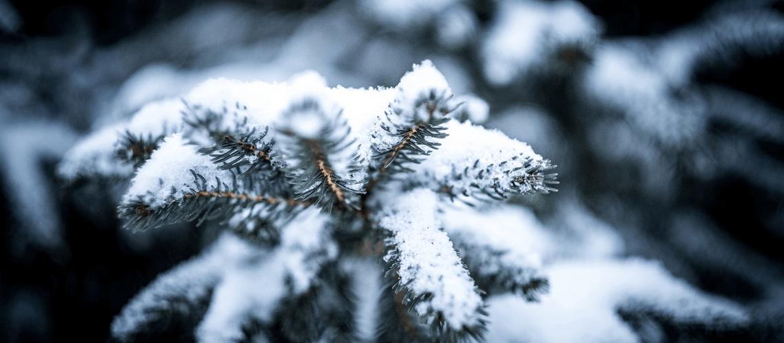 Levante Ideias - Neve