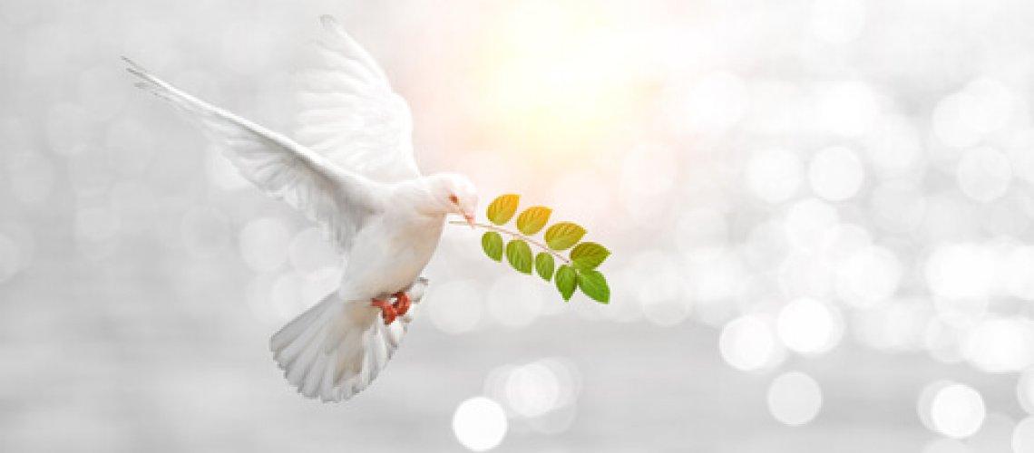 Levante Ideias - Paz